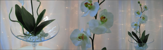 Orchid and giant martini vase centrepiece for hire