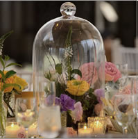 Glass dome cloches for hire, Centrepieces, Auckland